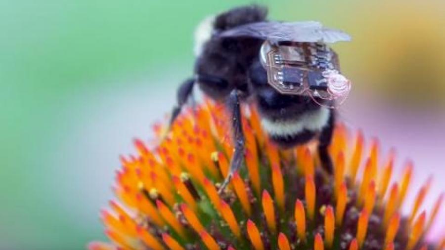 abejas-iot