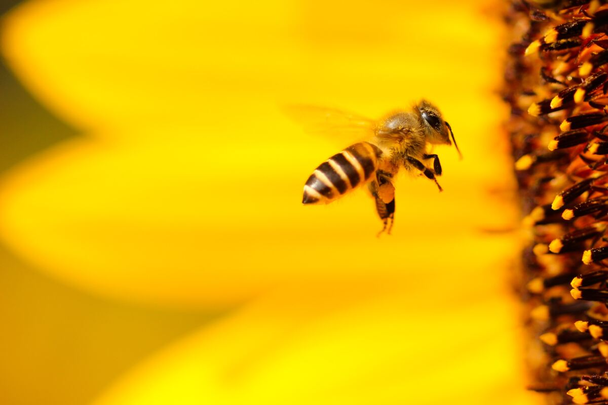 Conectando y salvando abejas