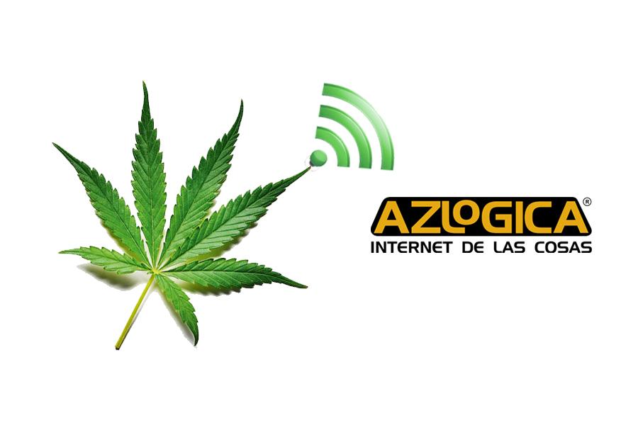Cultivadores de Cannabis Adoptan IoT para Optimizar Procesos