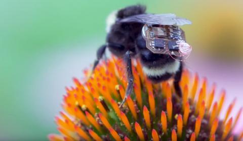 ¡IoT pueden salvar a las abejas!